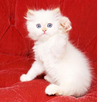 Framgången började med en liten söt katt - nu är Hello Kitty ett varumärke
